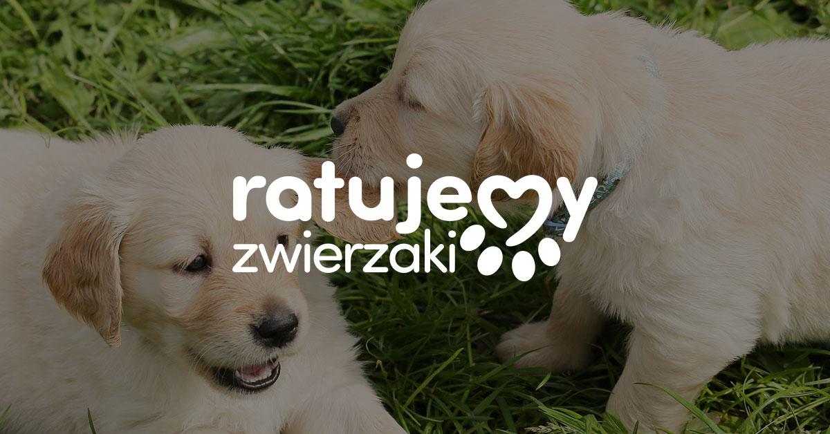 www.ratujemyzwierzaki.pl